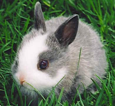 fluffy baby bunny - photo #39
